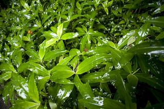 Moist Green Plantation