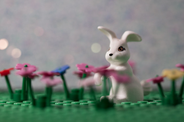 Bellville Rabbit with Flowers