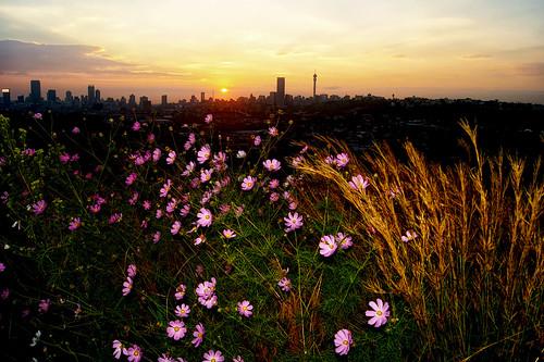 flash cosmos johannesburg jozi konica minolta sunset sky city landscape cityscape