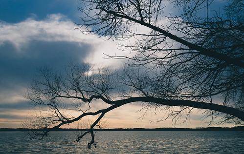 albertlea albertlealake april bigisland minnesota myrebigisland myrebigislandstatepark forest spring statepark sunset trees