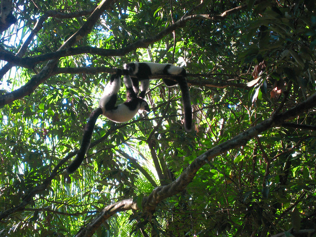 Madagascar2010 - 53