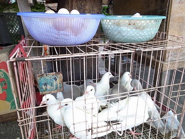 <p>鳩も</p>