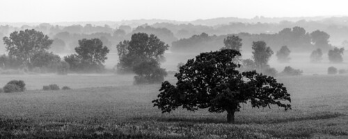 2012 july landscape sky tree waukesha wisconsin blackandwhite fog misty monochrome oak wacco