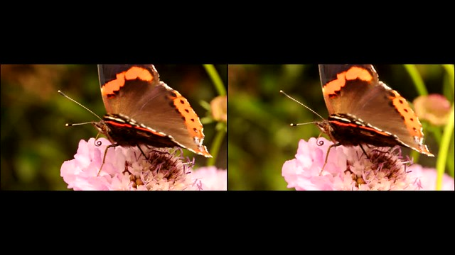 Red Admiral Butterfly on flower -  3d movie clip - crossview