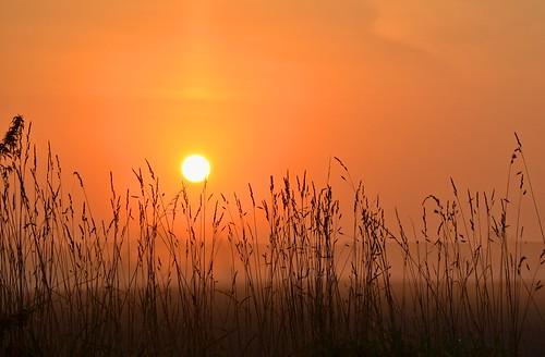 sky sun color nature grass sunrise germany landscape deutschland saxony natur himmel ciel sachsen gras tobi landschaft sonne farbe sonnenaufgang allemagne germania