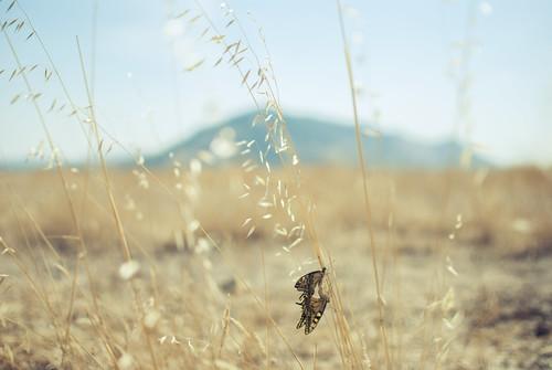 Butterfly engagement | by josemanuelerre