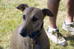 Greyhound Adventures at Webb Memorial State Park, Weymouth MA, July 13th 2014