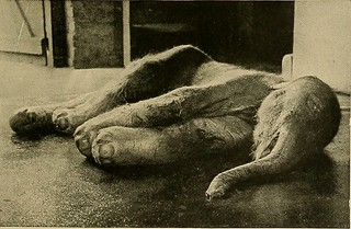 "Image from page 208 of ""Animal Life and the World of Nature; A magazine of Natural History"" (1902) 