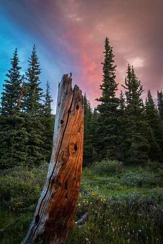 sunrise colorado snag niwotridge mountainresearchstation