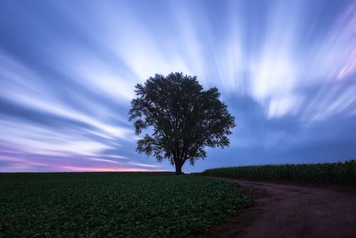 tree japan sunrise hokkaido cloudy 北海道 lonely biei 2014 美瑛 日の出 哲学の木 philosopherstree arcreyes kamikawadistrict