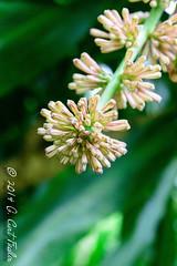 Day 235: Unknown Flower by umijin