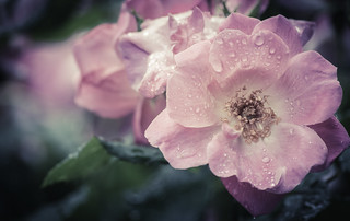 after the rain | by CarinaMcKee