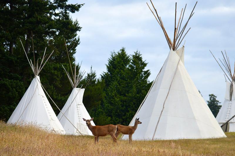 Deer and Tipis