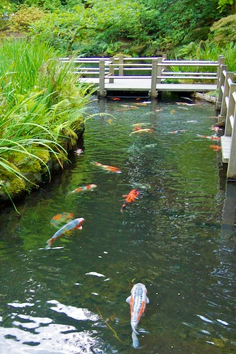 Portland Japanese Garden + Rose Garden | by miss604