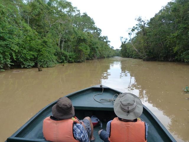 Navegando por el río Kinabatangan y sus canales en Borneo (Malasia)