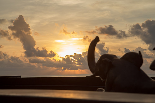 Elephant Sunrise | by a300zx4pak