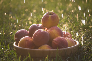 Summer Peaches | by smith_family