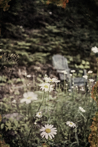 Pushing up daisies | by JSB Photo GTA