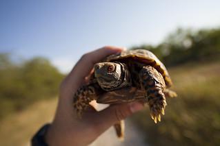 Tortoise | by Jonathan Urrutia