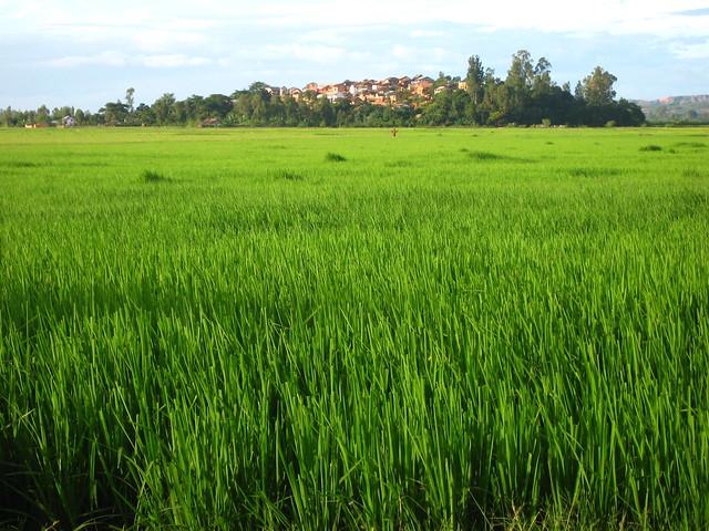 Madagascar2010 - 19