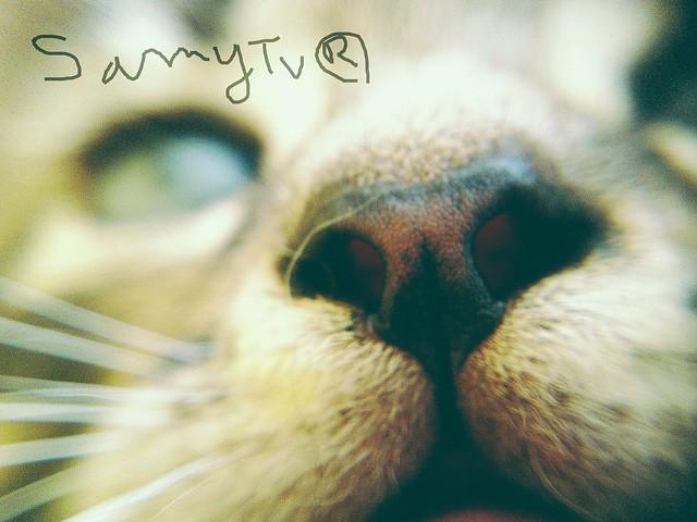Macro of a feline's nose. Cat, lion or tiger ? Macro de la truffe d'un félin . Lion, tigre ou chat ?