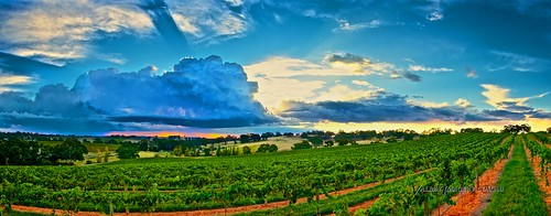 sunset panorama storm landscape vineyard vines australia valley barossa imagery