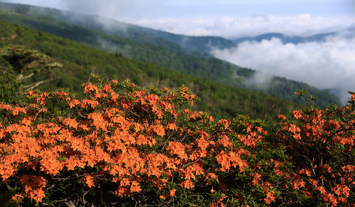fog northcarolina flame northcarolinamountains flameazalea roanhighlands durinsday canon6d