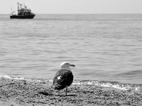 Seagul | by Nicole Compton