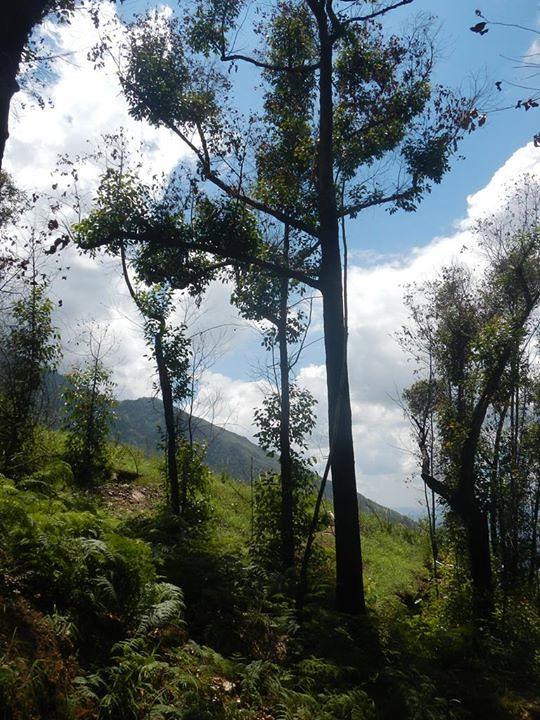 DSCN6344: venezuela http://flic.kr/p/oYmCM3