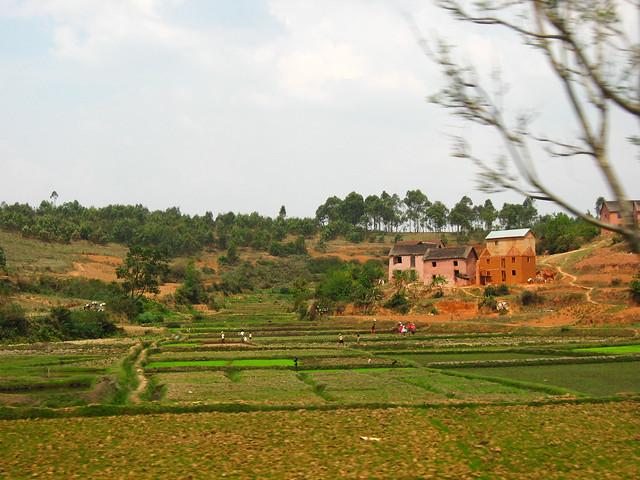 Transition to Madagascar135