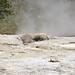 Mastiff Geyser (Giant Group, Upper Geyser Basin, Yellowstone Hotspot Volcano, nw Wyoming, USA)