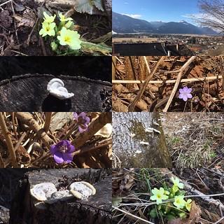 Der Frühling ist da 😊🌹🌺🌸🌷