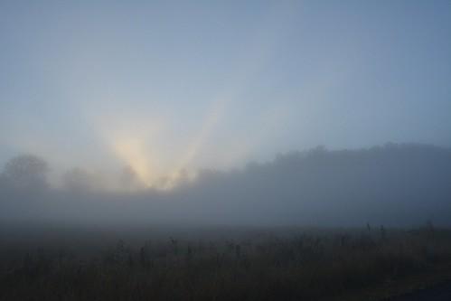 winter fog skyline sunrise fence landscape dawn countryside weeds foggy australia pasture nsw australianlandscape sunbeams foggymorning treesinfog northernrivers valleyfog morninglandscape australianweather leycestercreekvalley