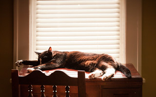 Snoozin' by the Morning Light | by heightsfidelity