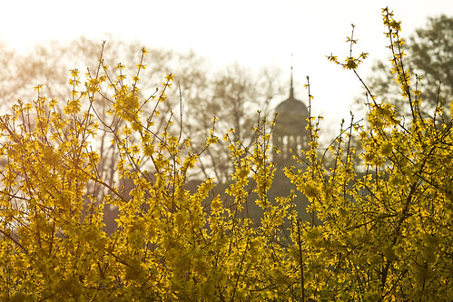 Spring blooms with the library cupola in background