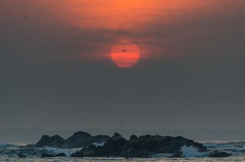 sunrise srilanka asiasociety polhena