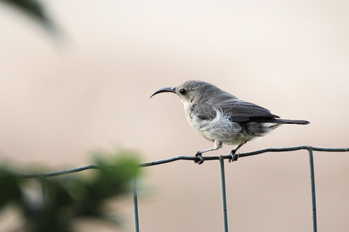 bird garden israel hummingbird jardin 300mm oiseau colibri 70300