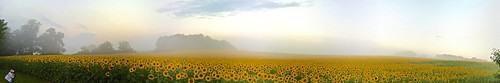 autostitch panoramic sunflowers harfordcounty jarrettsvillepike hessroad iosapp