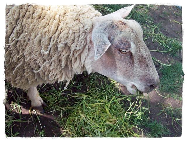 How kind, gentle animal!-Milyen kedves, szelid állat!