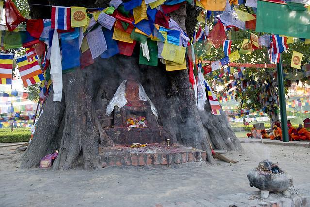 NPL - Bodhi tree - Lumbini 23