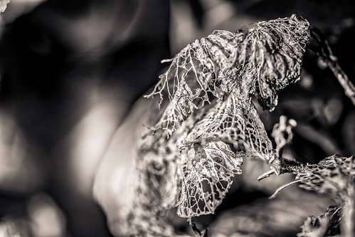 The Abstraction Of Hydrangea Decay