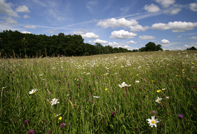 Meadow's @ Shipbourne Kent