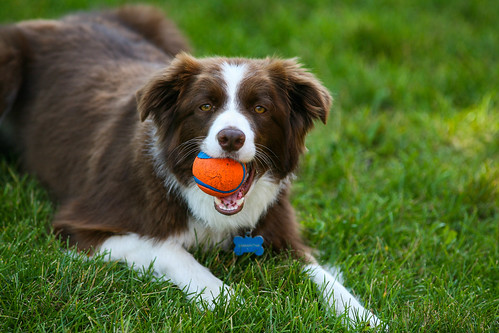 20140808-samantha-6.jpg | by trothwell