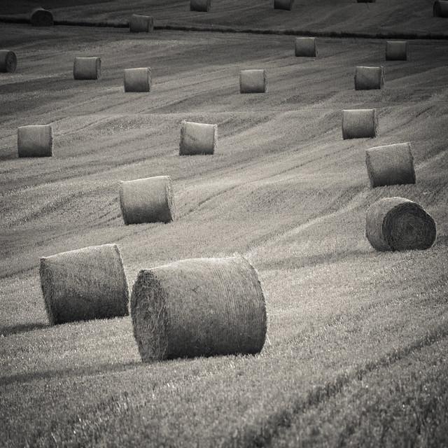 Landscape - Field