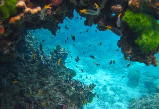 underwater world of andaman sea           IMG_0578bs | by Phuketian.S