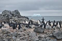 Ilha Pinguim