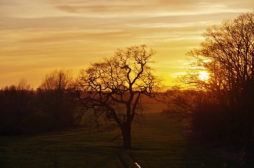 tree trees silhouette sun sunset fields countryside clouds sky light