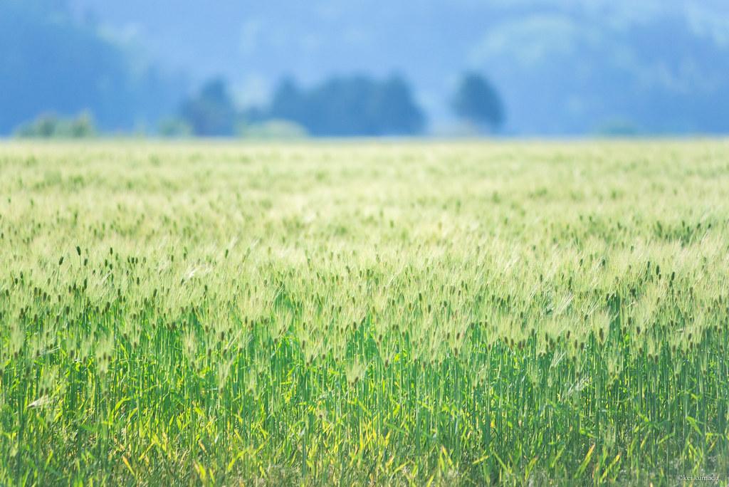 田舎風景 | Kumada Kei | Flickr