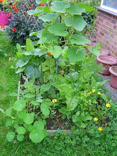 front garden raised bed