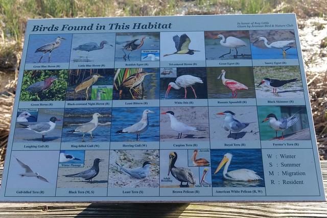 Port Aransas Birding